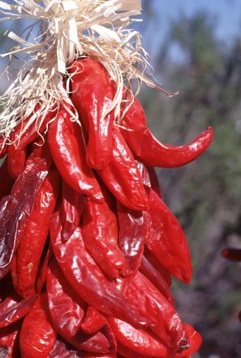 Chili Ristra